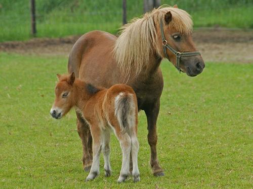 Lente pony
